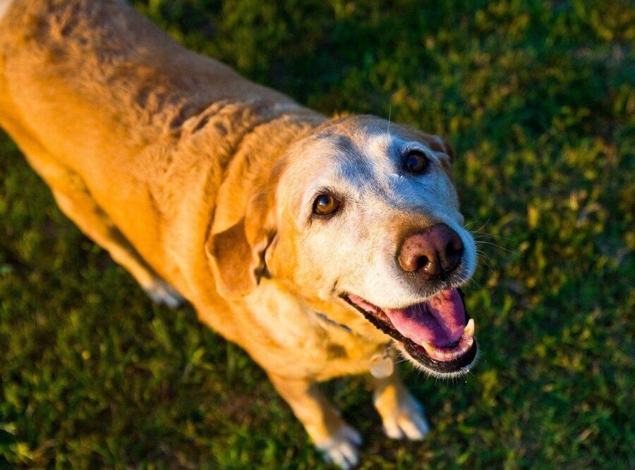 cane tenero sorridente