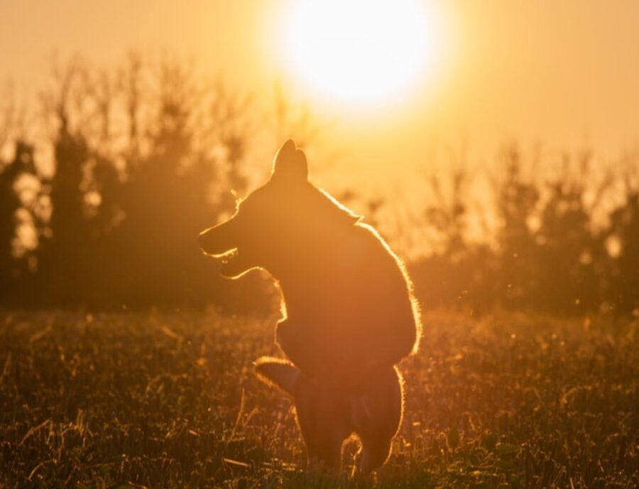 cucciolo tramonto profilo