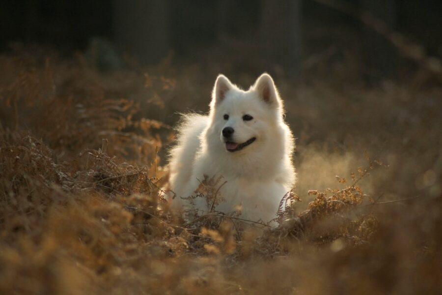 cane bianco natura