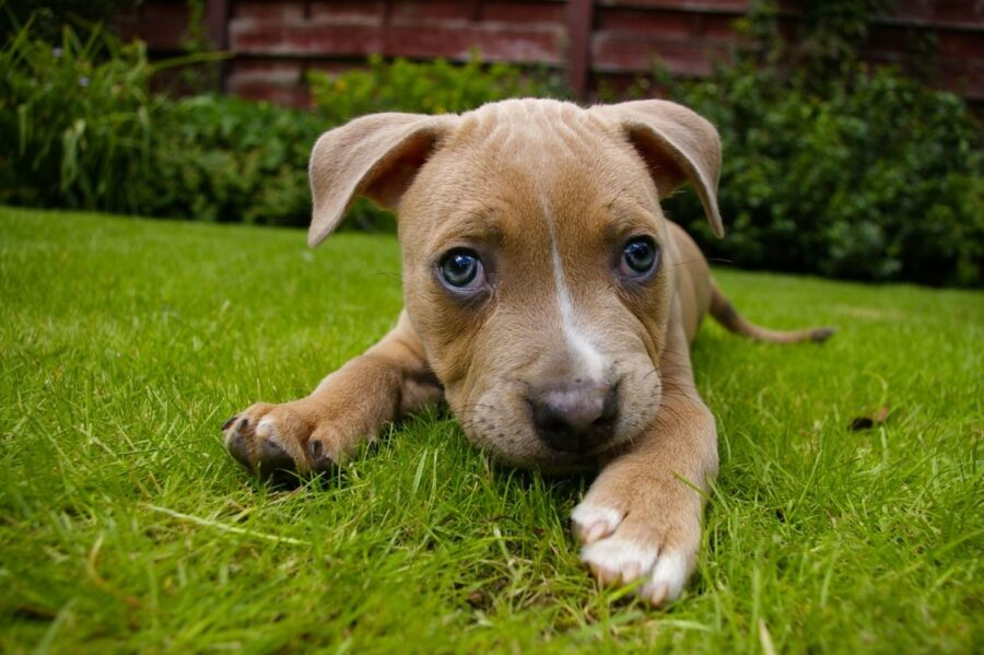 cagnolino tenero erba