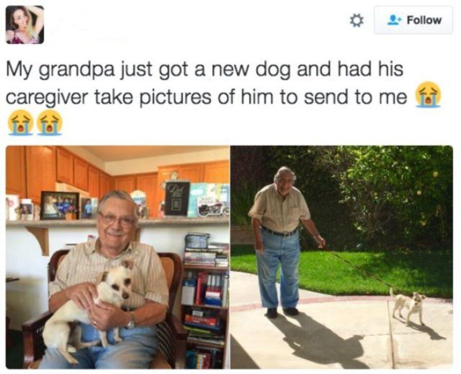 cucciolo cane anziano