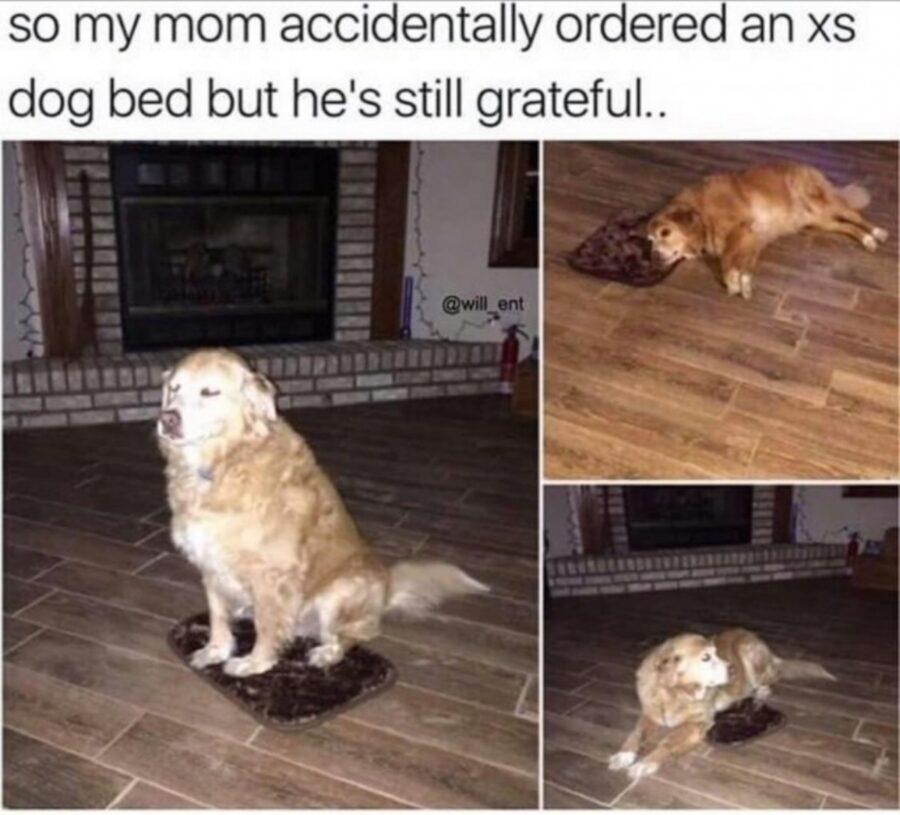 cane seduto tappetino