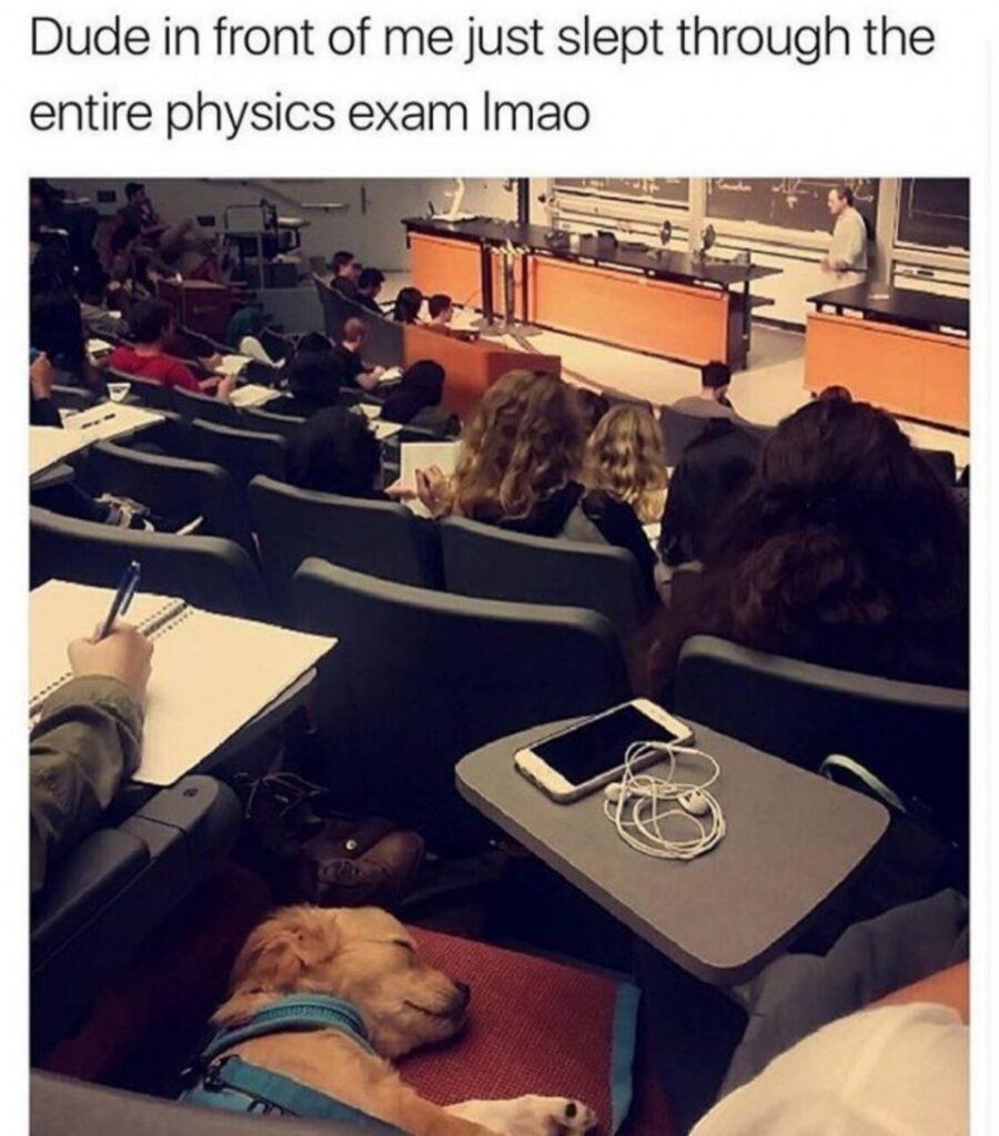 cagnolino lezioni dorme