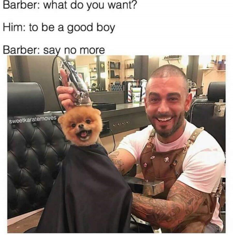 cane barbiere parrucchiere