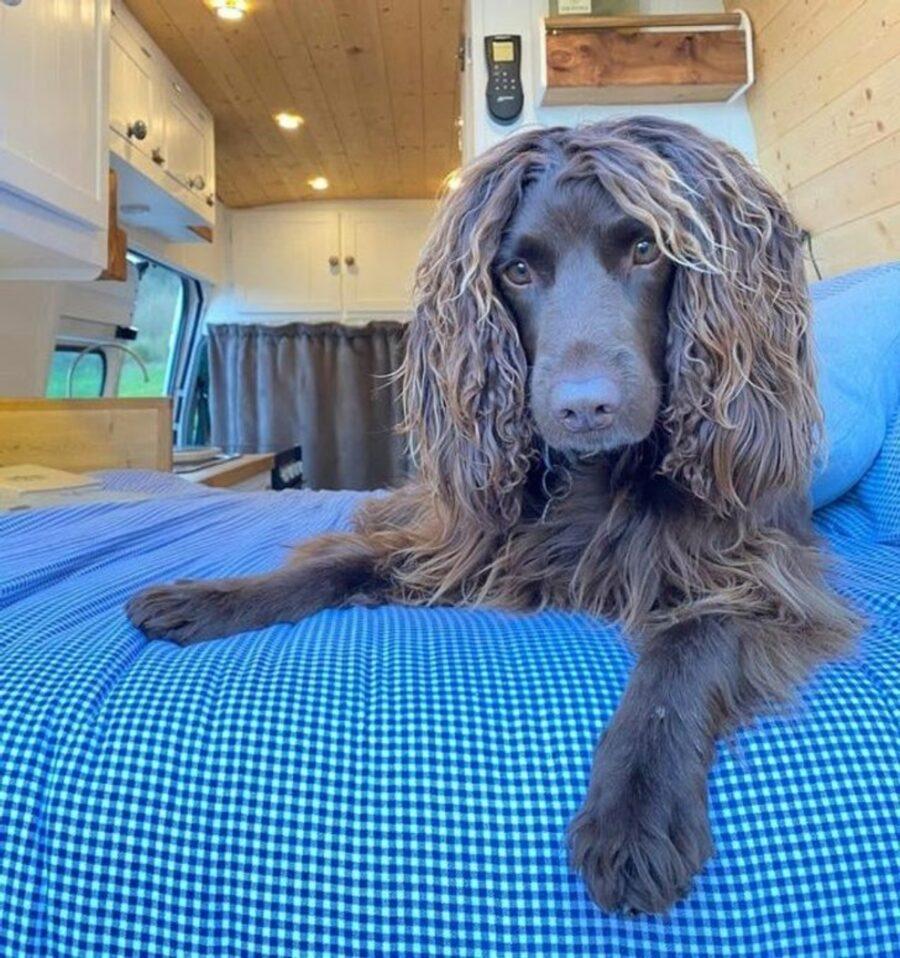 cagnolina pelo capelli