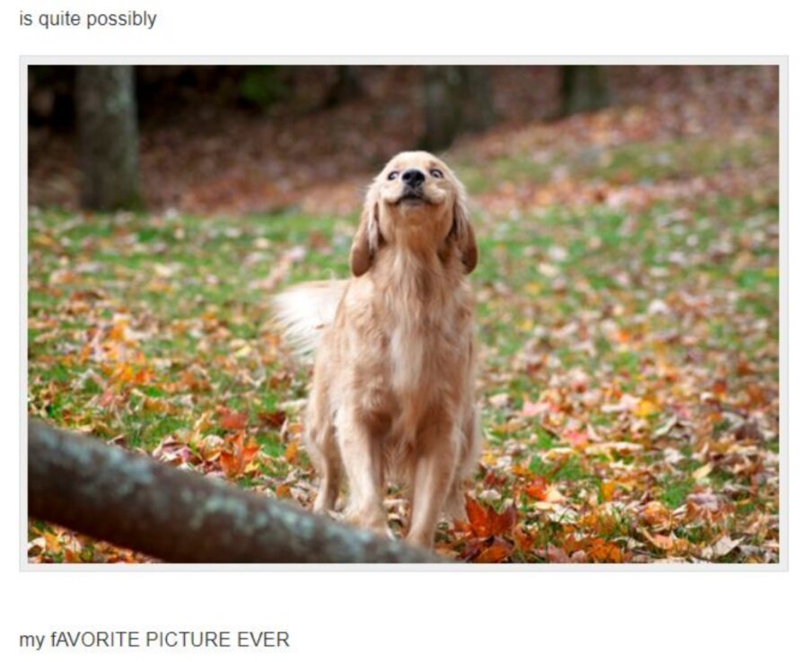 cane sorriso stupendo