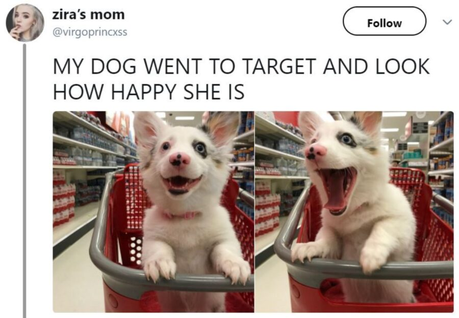 sorriso cane gioia