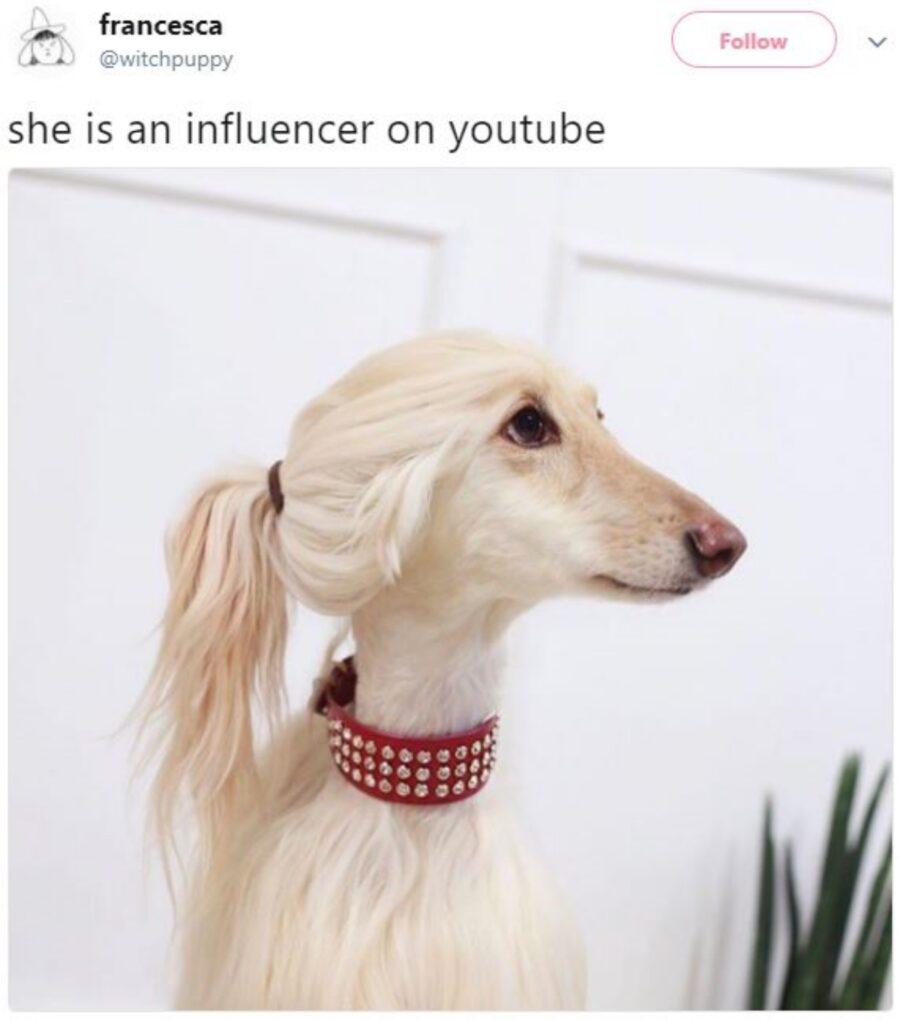 cane capelli pelo