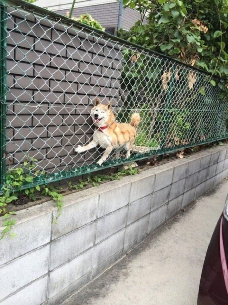 cane rete incastrato