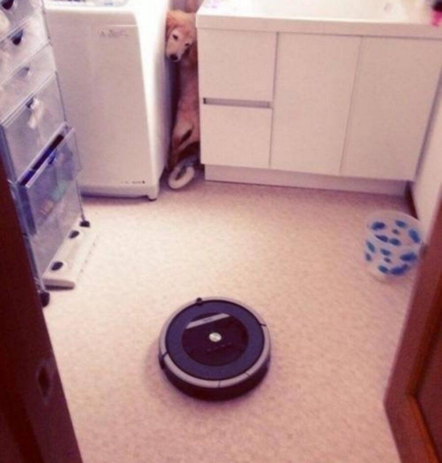 cane aspirapolvere robot