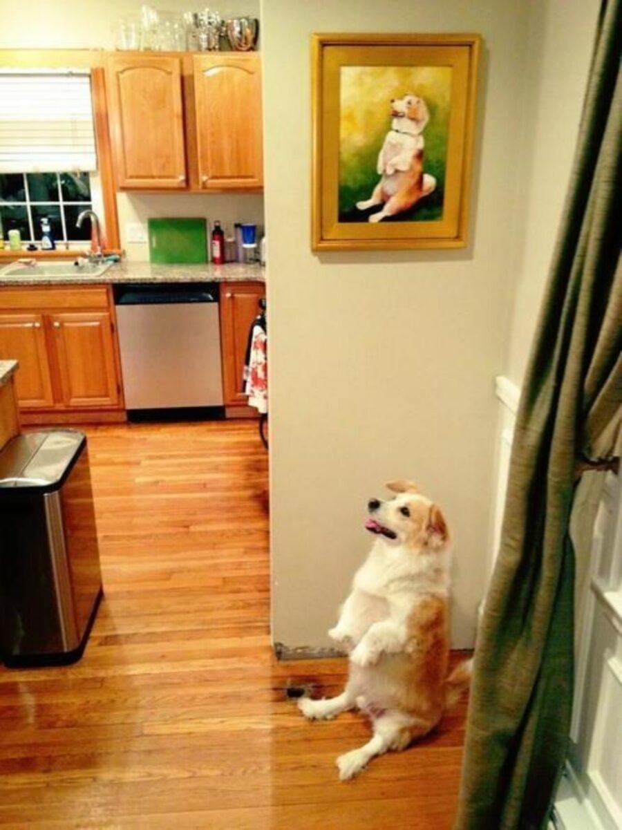 cane dolce seduto