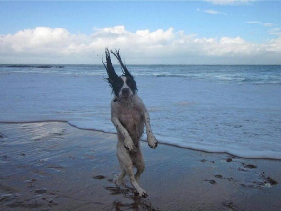 cane acqua buffo