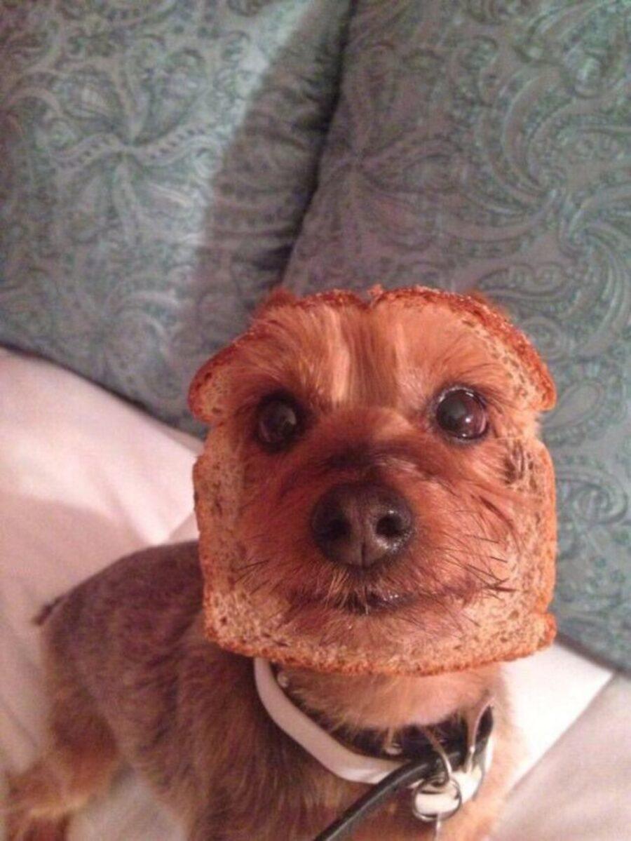 cucciolo fetta biscottata