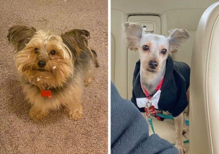 cane uguale diverso