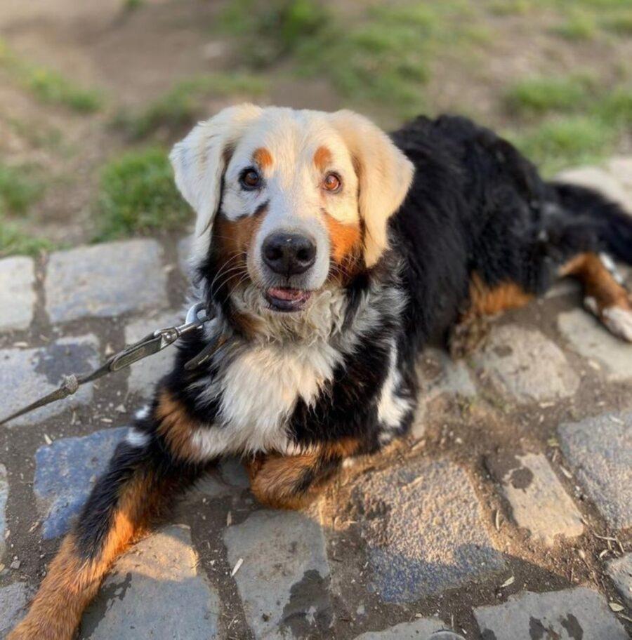 cane colori bizzarri