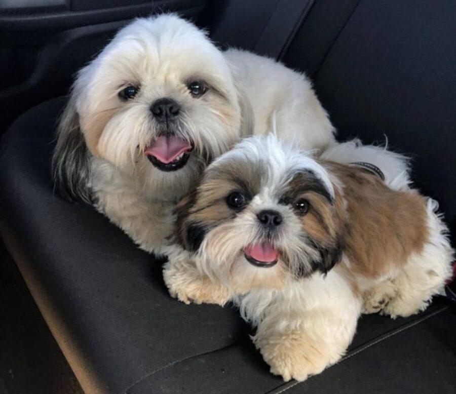 cani dolci coppia