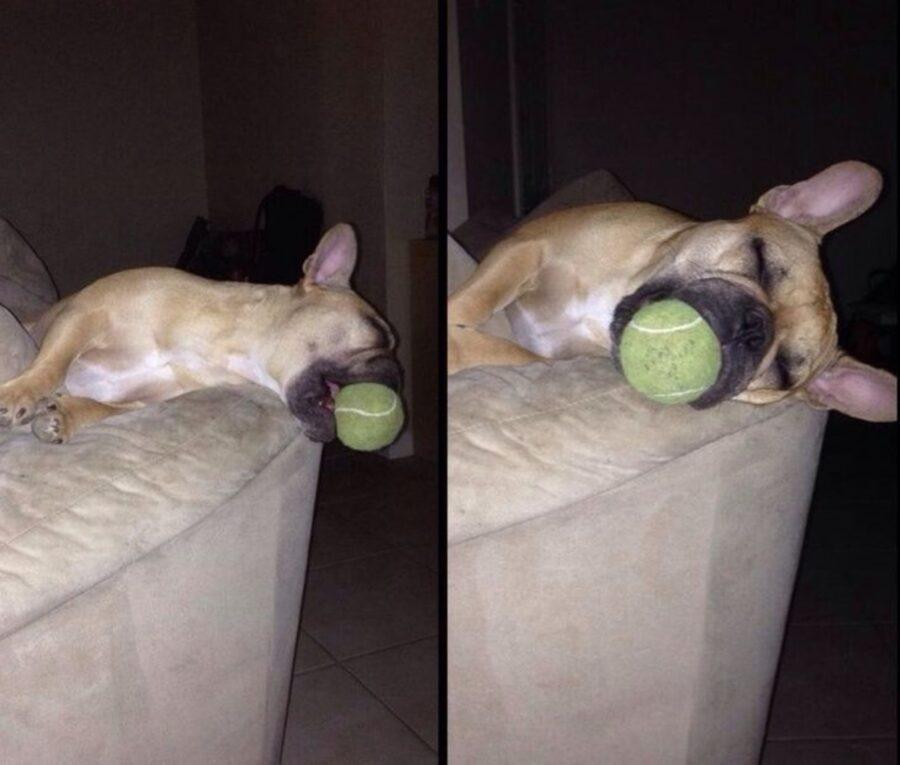 cucciolo dorme pallina