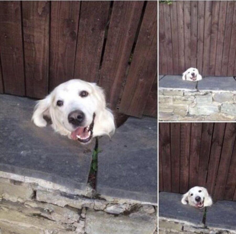 cane guarda staccionata