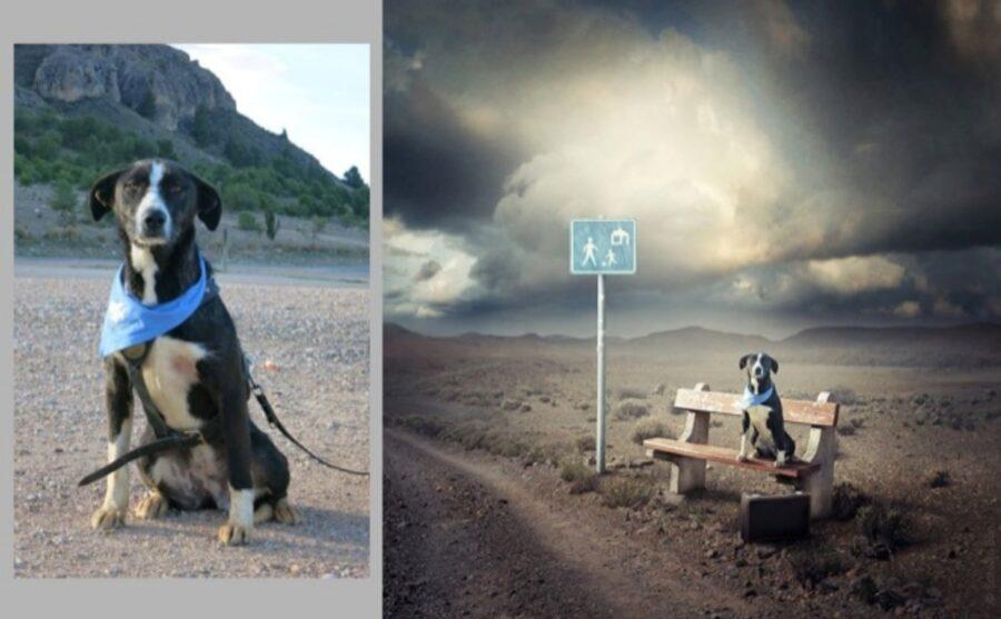 cane panchina attesa