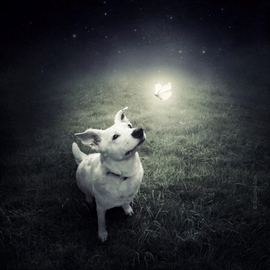cucciolo bianco guarda