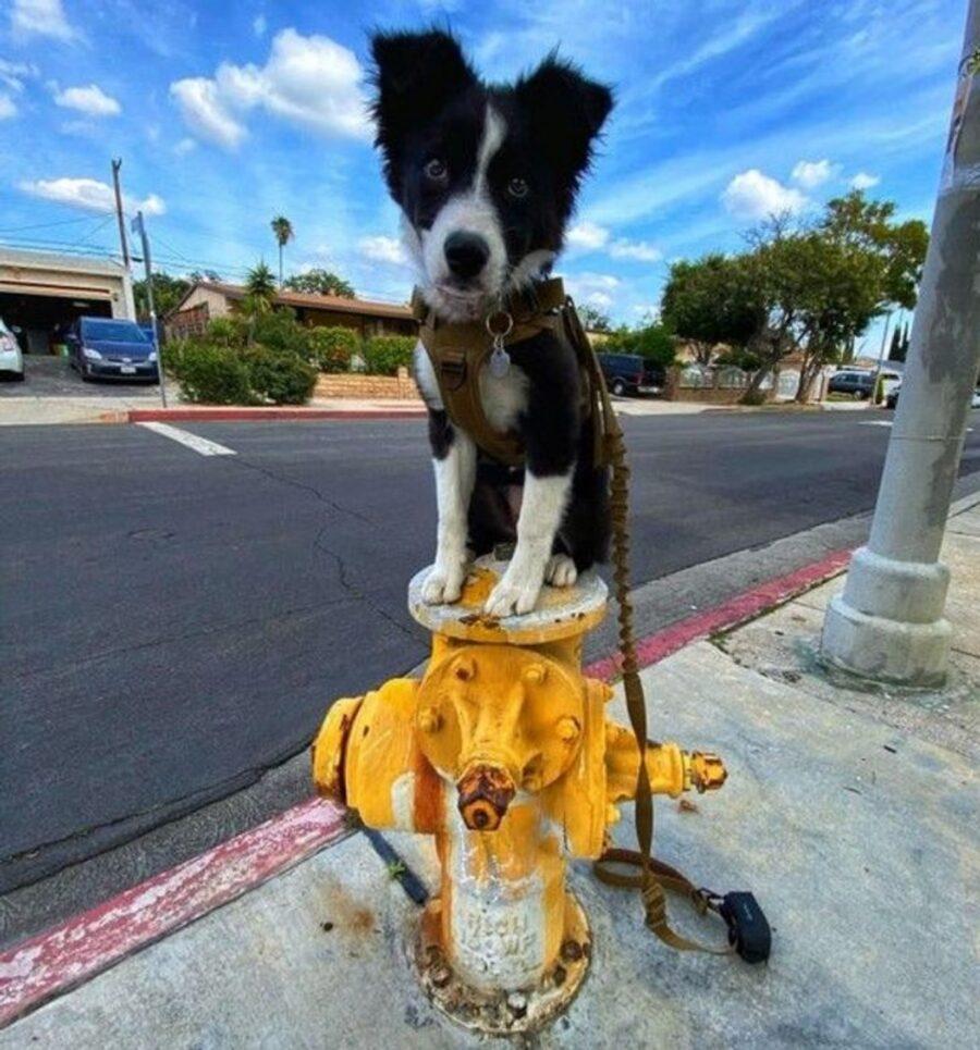 cucciolo sopra idrante