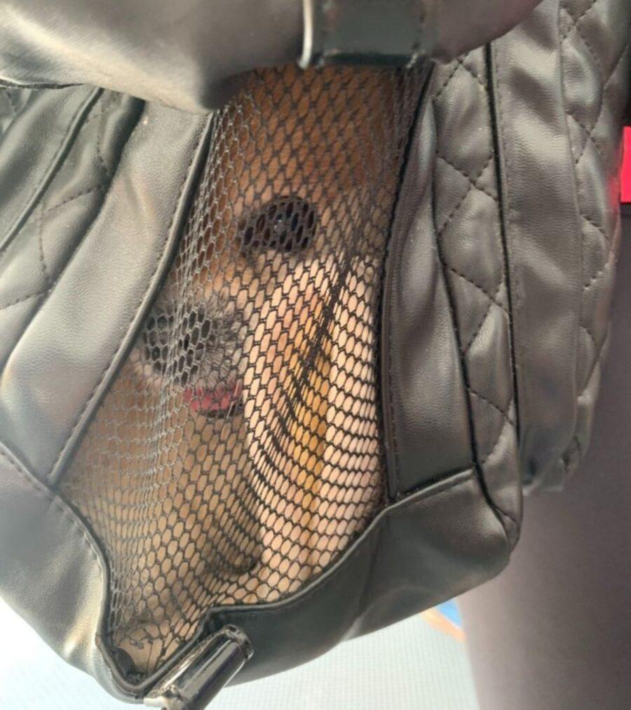 cane dentro sacca