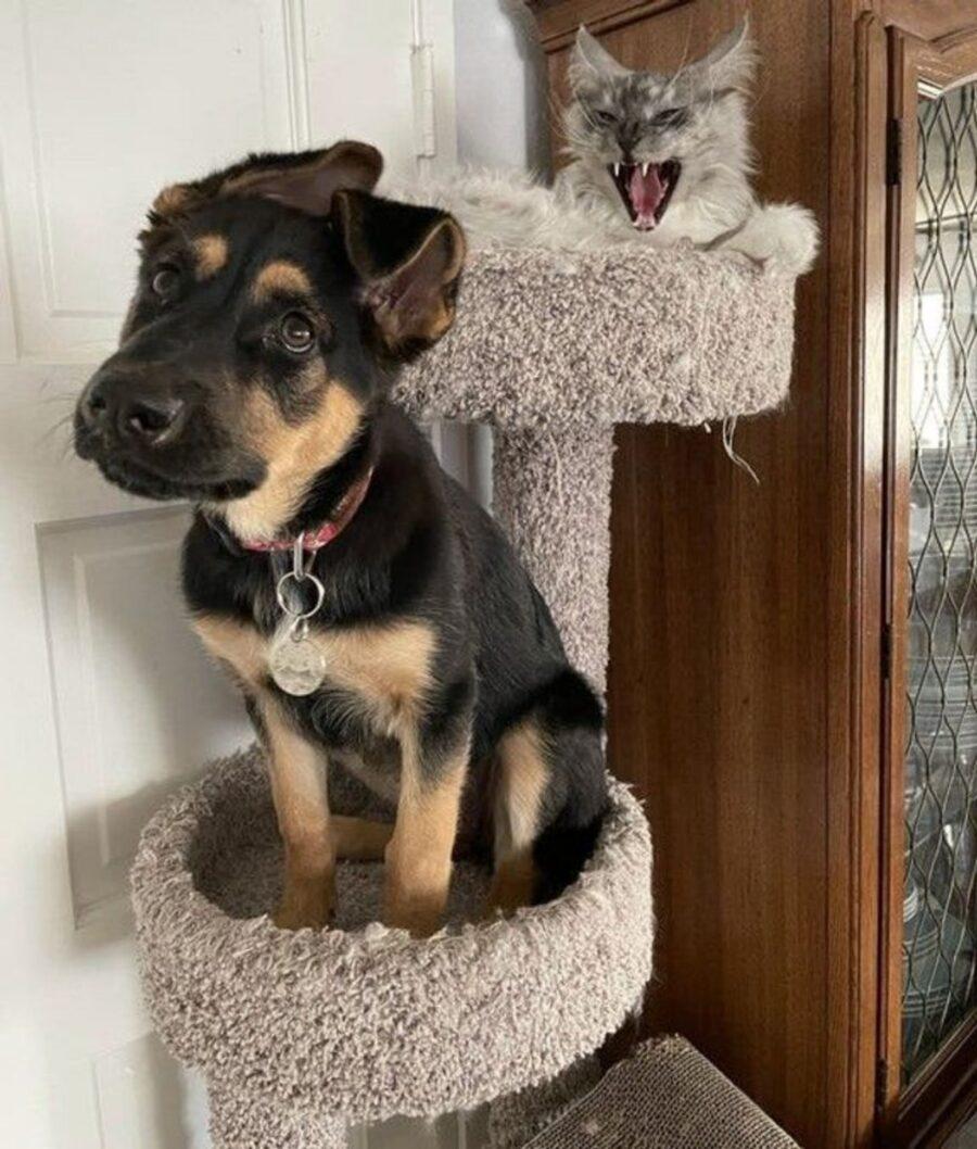 cane sopra tiragraffi