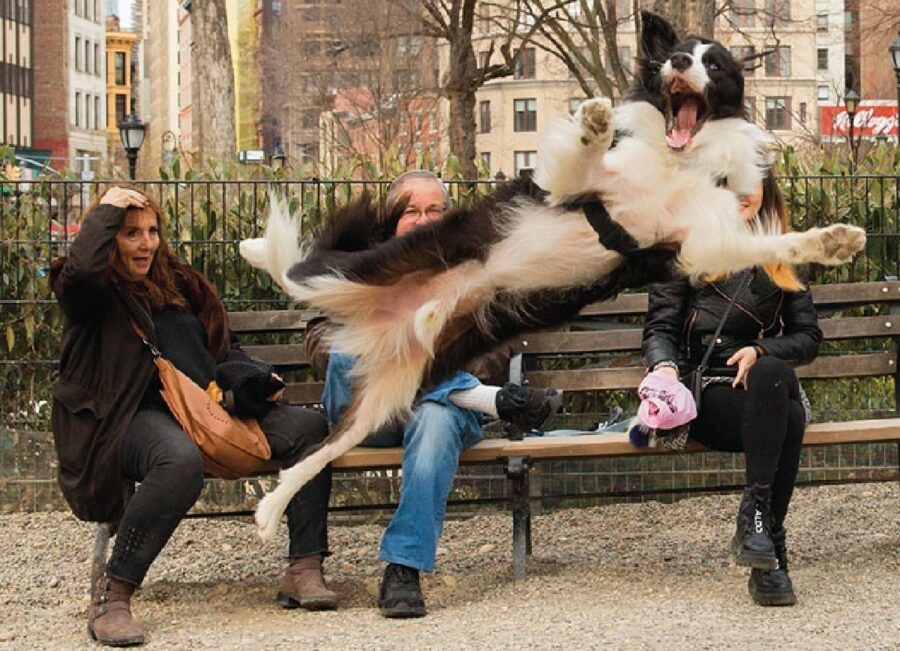 cane salta davanti donne