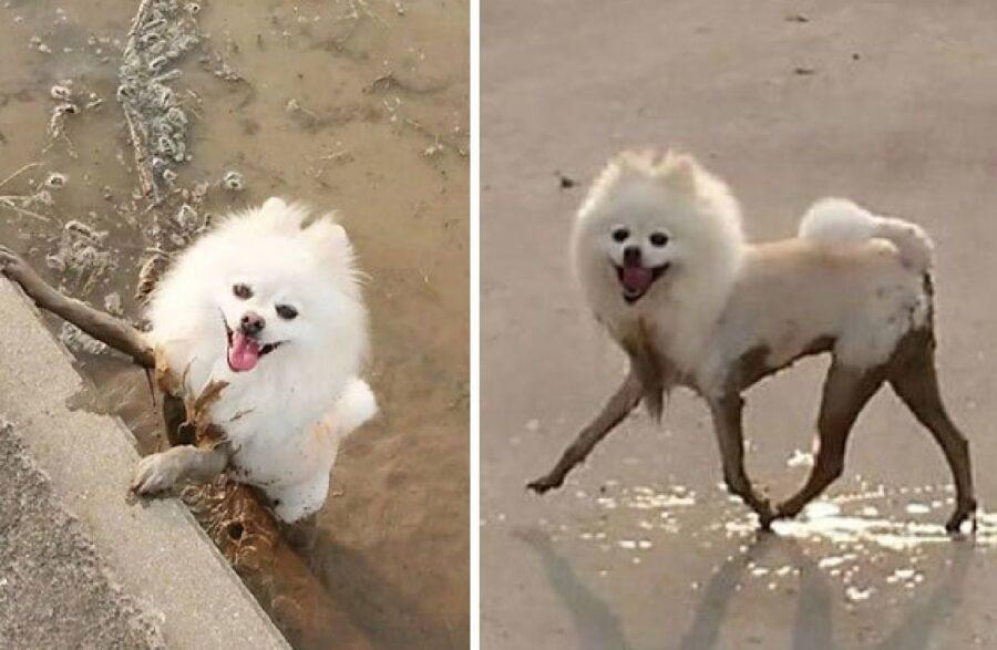 cane passeggia sulla terra