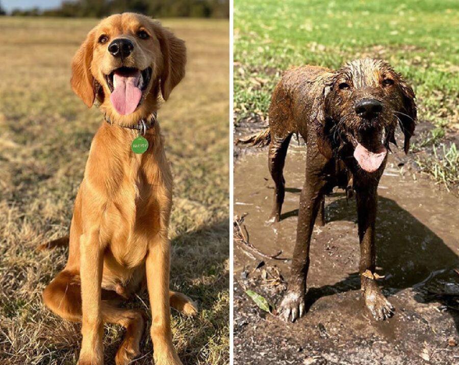 cane prima e dopo gioco melma