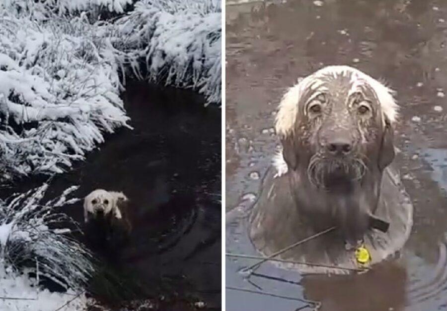 cane dal pelo bianco si immerge laghetto