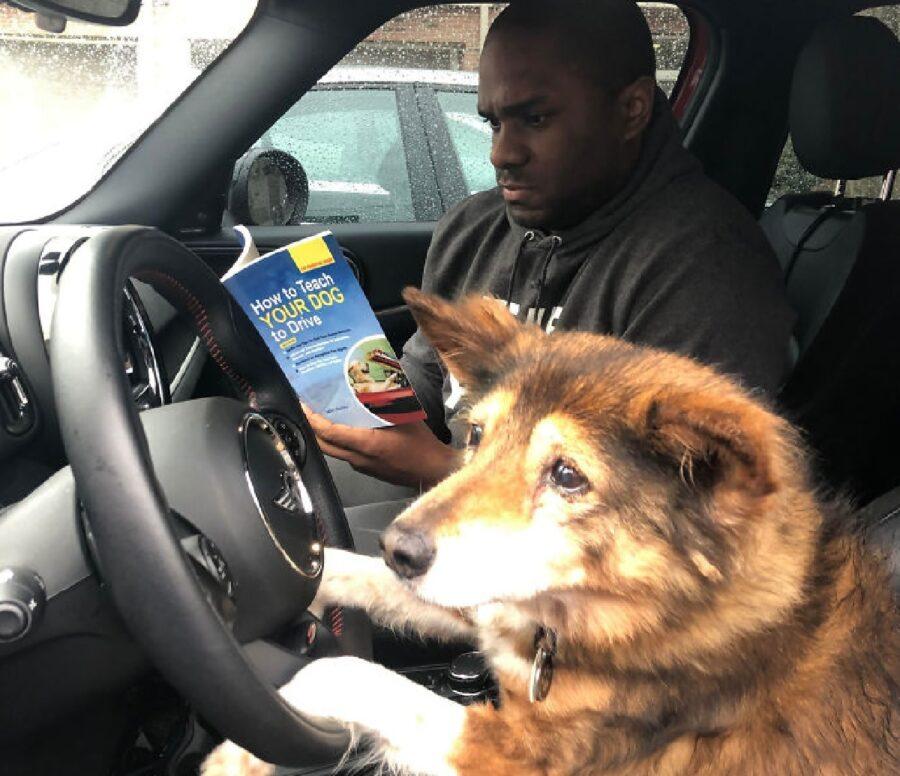 cane prova a guidare