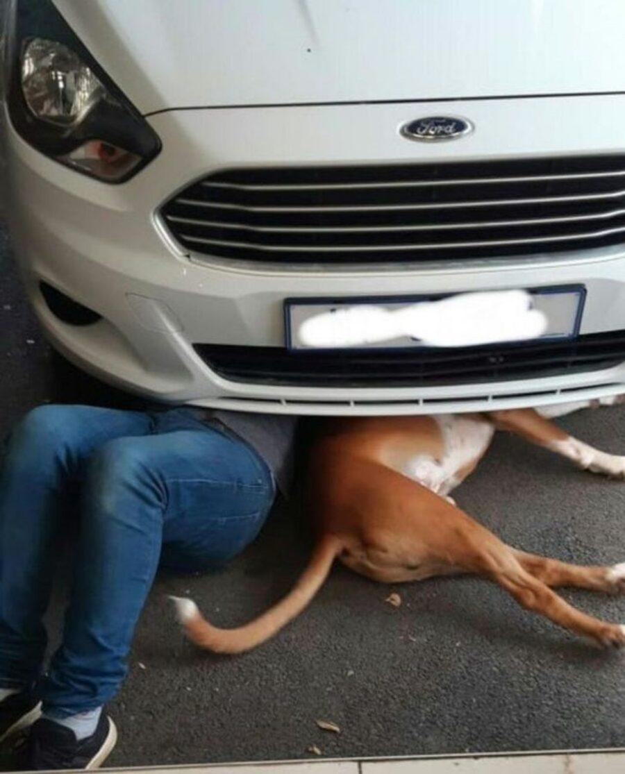 cane papà riparare