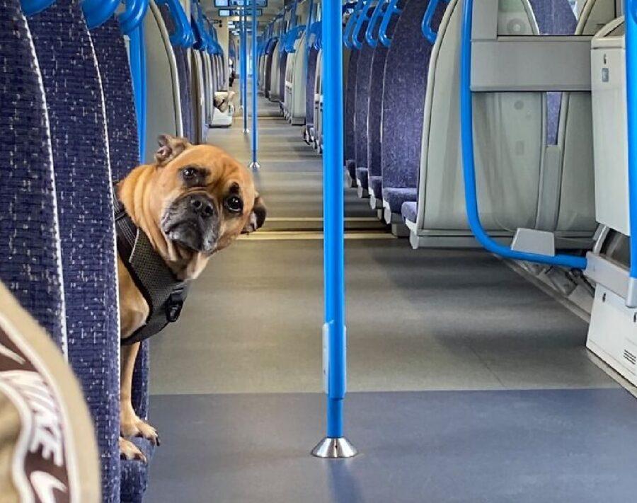 cagnolino in bus blu
