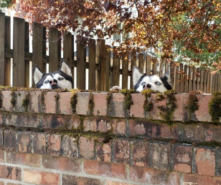 cagnolini fratelli husky