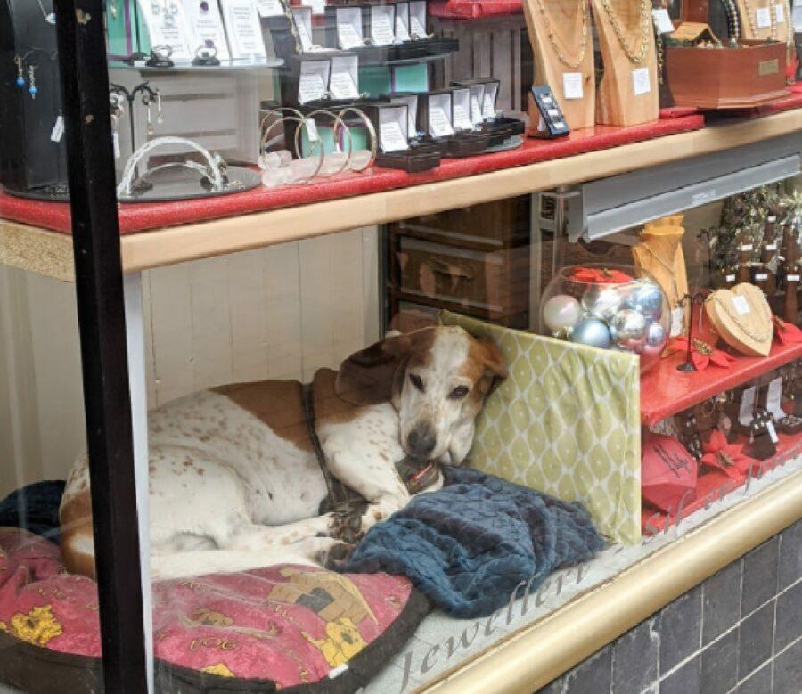 cucciolo dietro vetrina negozio