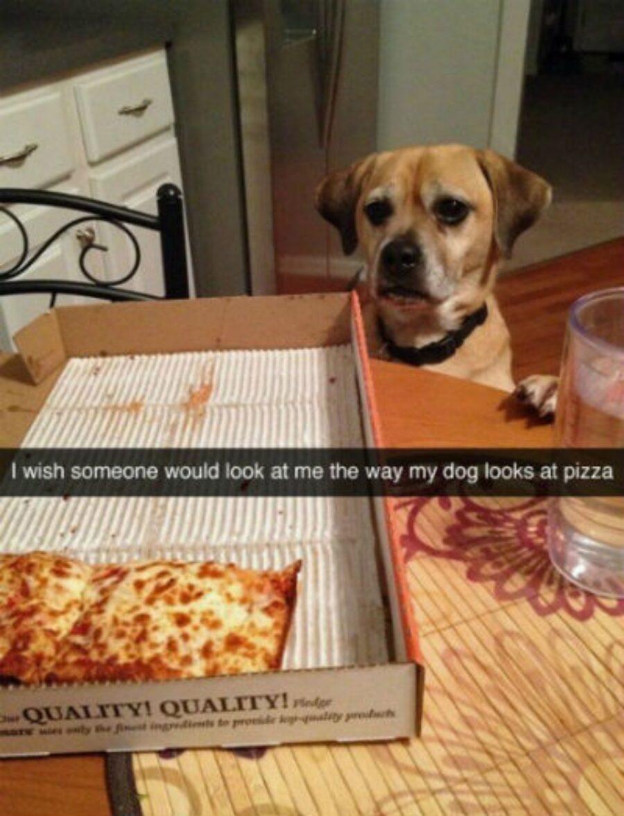 cucciolo pizza guarda