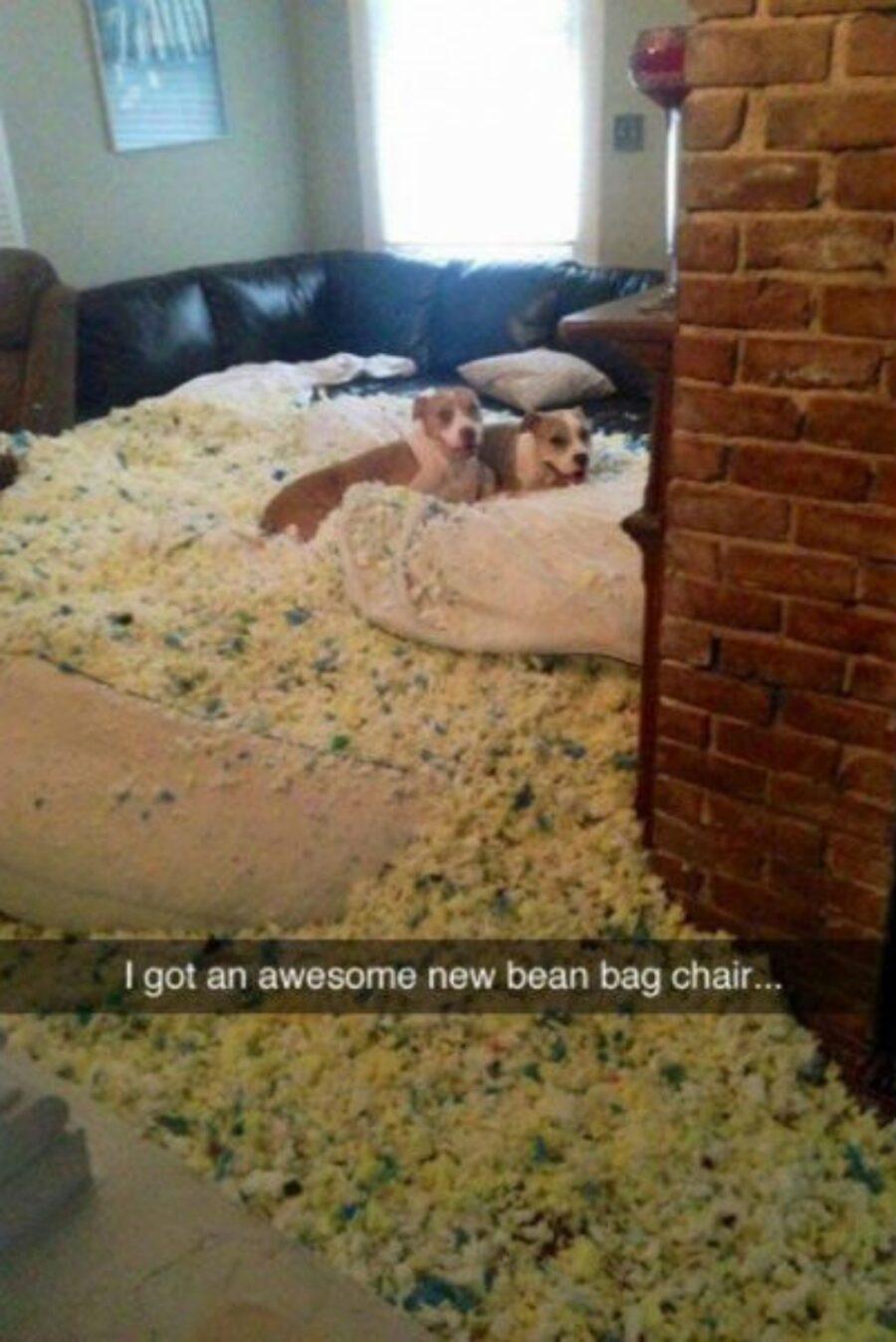 cani imbottitura cuscino