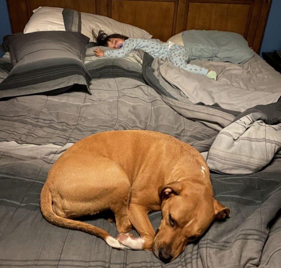 cane rannicchiato letto