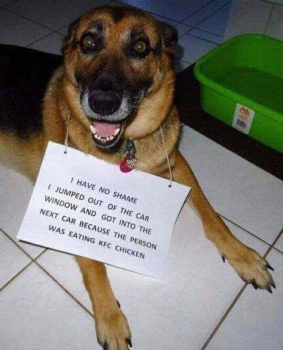 cane cartello buffo