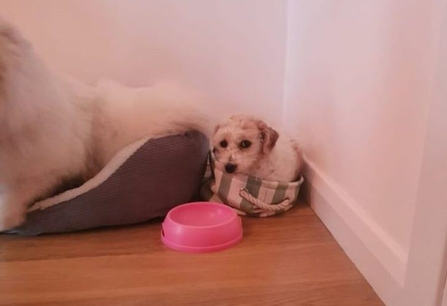 cagnolino piccola cesta