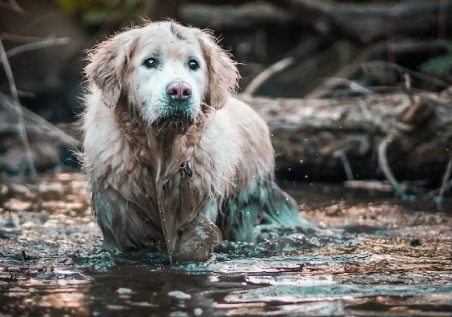 cane grossa taglia acqua