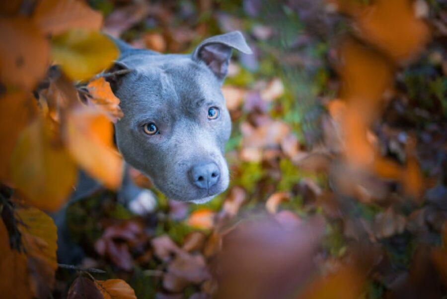 cane coperto dalle foglie
