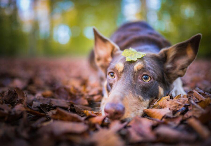 cane foglia sul capo