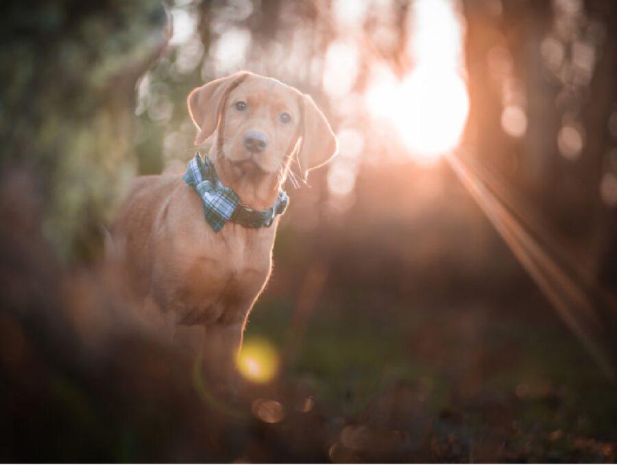cagnolino collare colore blu
