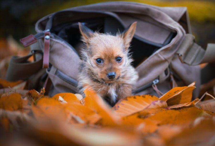 cane dentro borsa davanti foglie