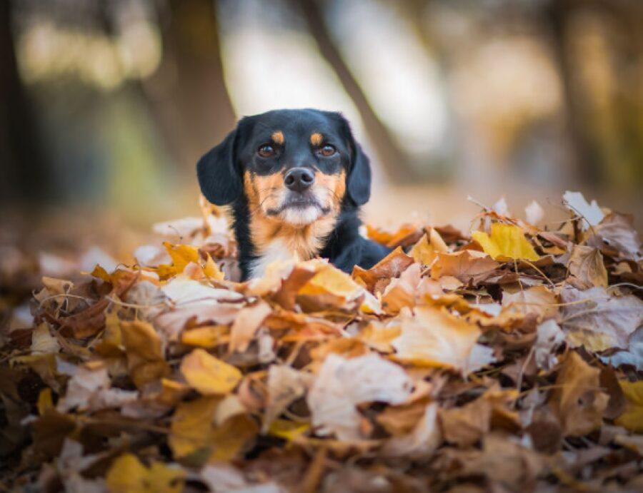 cane in mezzo le foglie