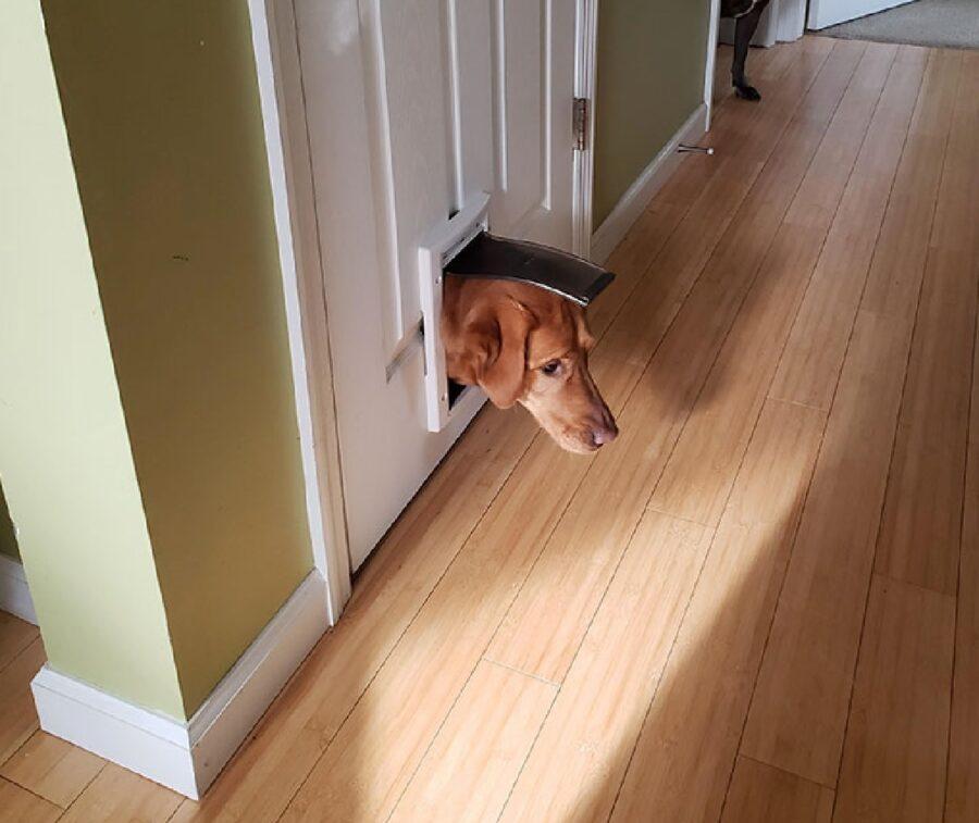 cane tira fuori testa