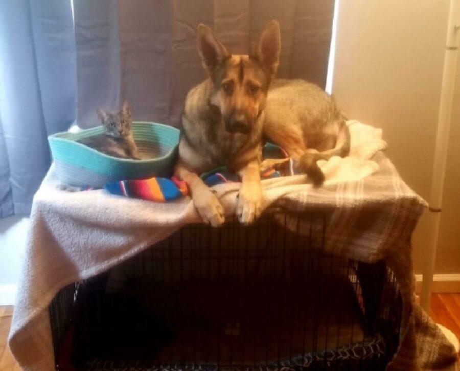 cane pastore tedesco seduto