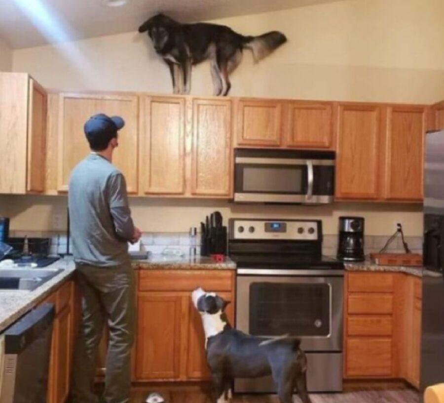 cane su mobile cucina